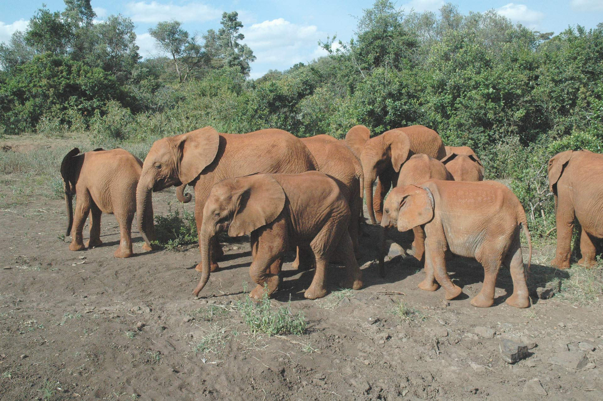 Elephant Hosting Family