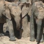 Elephant Hosting