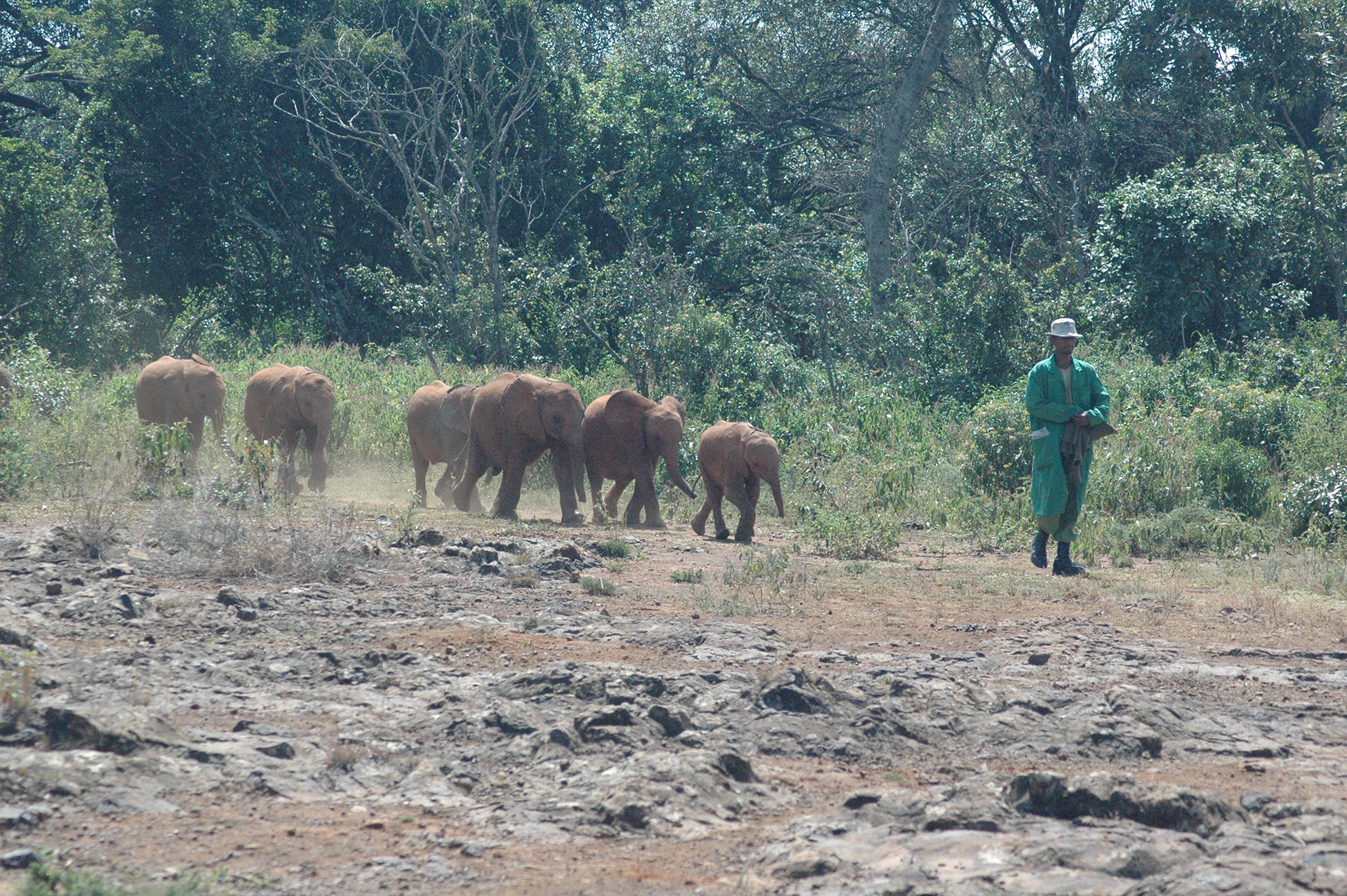 David Sheldrick Wildlife Trust - Elephant Sanctuary